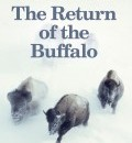 Cover image for The Return of the Buffalo (paperback) by Deirdre Cartmill